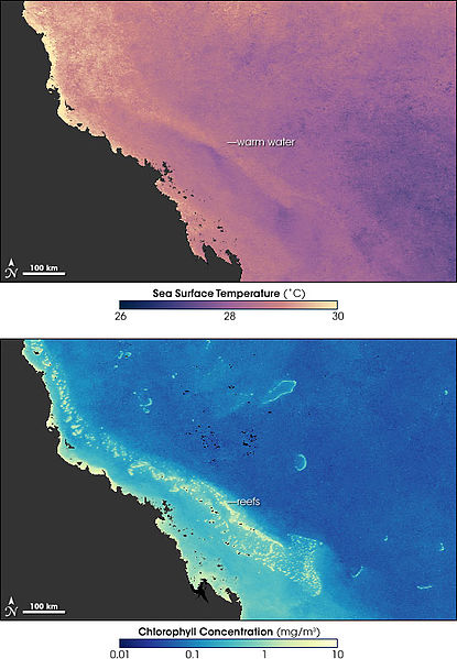 Tests Prove Rising Water Temperatures to Blame for Reef Destruction