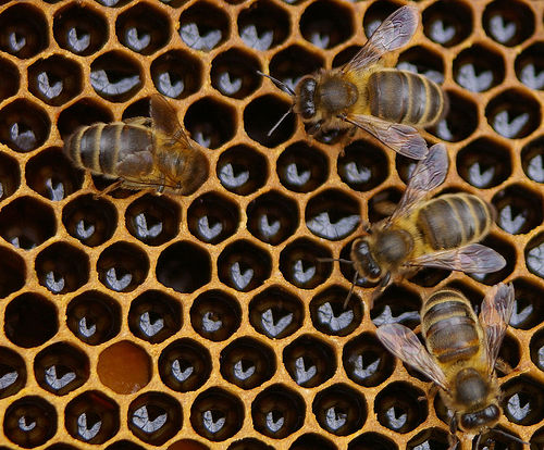 Beekeepers Ask for Pesticide Ban