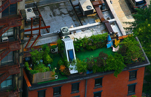 Rooftop Gardens Will Become Easier to Set up in New York City Due to New Zoning Rules - Image from Google