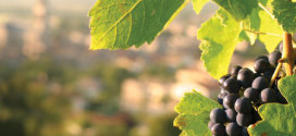 What is environmentally friendly wine?